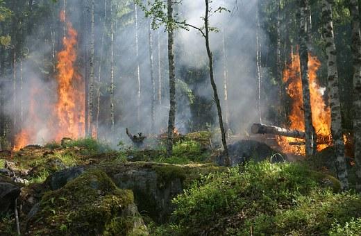 árbol quemado