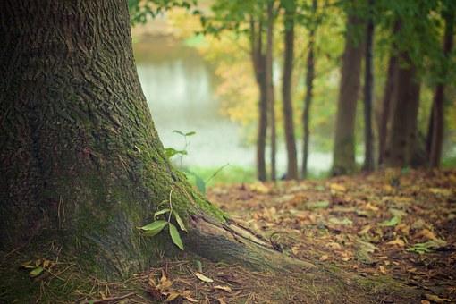 árbol robusto